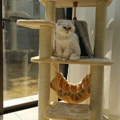 ペット共生/シェアハウス/猫と暮らす 猫と暮らすシェアハウス