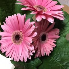 花 ガーベラ好きです。 かわいいなぁ💕と思っ…(2枚目)