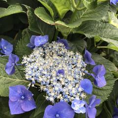 梅雨/梅雨対策/雨対策/梅雨対策アイテム/梅雨便利グッズ 今日は、紫陽花を見に行きました。 久しぶ…