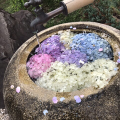 6月/紫陽花 アップし忘れてたので、もう一度。 これ、…