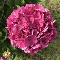 梅雨/梅雨対策/雨対策/梅雨対策アイテム/梅雨便利グッズ 今日は、紫陽花を見に行きました。 久しぶ…(6枚目)