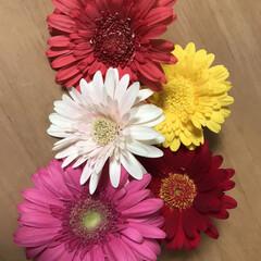 花 ガーベラ好きです。 かわいいなぁ💕と思っ…(1枚目)