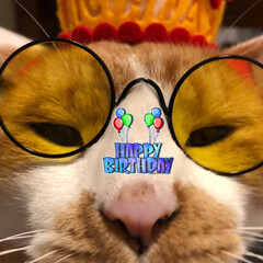 生活の知恵/雑貨/DIY/猫 今日は 部長こと 長男14歳のお誕生日🎂…
