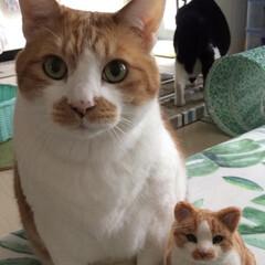 手芸/ペット/猫 ぼくのおとうと? #羊毛フェルト