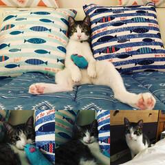猫 末っ子 ボクちゃん(ライトくん3歳)  …