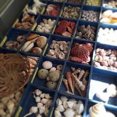 海辺/貝殻/海/貝/手作り材料/お土産 昭和が懐かしいお土産店が素敵でした* 貝…