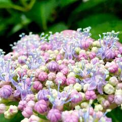 グリーン/お庭/フォロー大歓迎 自然の造形美💕