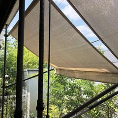 窓/リビング/西日対策/日差しよけ/オーニング/窓辺/... 我が家の暑さ対策 ✨其の三✨  西側窓の…