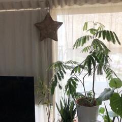 日除け/窓辺/IKEA/スクリーンカーテン 我が家の暑さ対策 ✨其の四✨  強風の時…