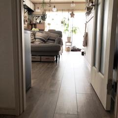 床/セルフリノベーション/グリーンある暮らし/LIMIAペット同好会/わんこ同好会/お弁当/... 玄関からリビングへと続く床  リノベで床…