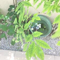 癒し/木陰/庭/キラキラ/ゆらゆら/浮き玉/... 本日【浮き玉】を 玄関前の 睡蓮鉢に浮か…(2枚目)