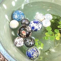 癒し/木陰/庭/キラキラ/ゆらゆら/浮き玉/... 本日【浮き玉】を 玄関前の 睡蓮鉢に浮か…