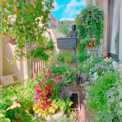 お花大好き/ベランダ/ベランダガーデン/ベランダガーデニング/雑貨/住まい/... 秋の寄せ植え作りました✨  でもまだまだ…