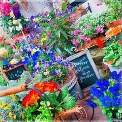 ビオラ/ベランダ/寄せ植え/お花大好き/雑貨/100均/... 雨ですね☔️ ベランダのお花をちょこっと…