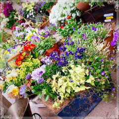 春の寄せ植え/ベランダガーデン/ガーデニング/お花大好き/雑貨/100均/... 今日のベランダ🌷