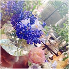 窓辺の花/窓辺/フラワー/切り花/実家の花/春の花/... 実家のお庭のムスカリとハナニラを飾りまし…