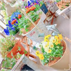 ビオラ/寄せ植え/ベランダ/ベランダガーデン/ガーデニング雑貨/お花大好き❤/... 蛇口つきの可愛い鉢を買ったので、黄色のビ…