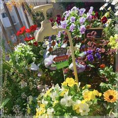 春の寄せ植え/ベランダガーデン/ガーデニング/お花大好き/雑貨/インテリア/... お水は出ません(笑)