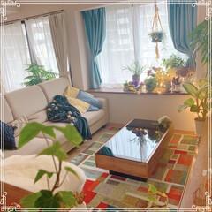 ベランダのお花/ベランダガーデニング/観葉植物/インテリア好き/LIMIAインテリア部/LIMIAインテリア/... 今日は雨降り。  ベランダのお花を切って…