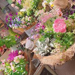 アンアリス/アネモネ/ベランダ/ベランダガーデニング/ガーデニング大好き/お花大好き/... 今日のベランダ . アンアリスお迎えしま…