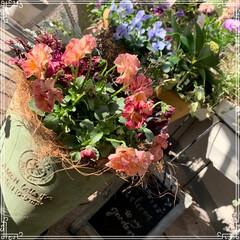 お花大好き/お花/ベランダ/ガーデニング/寄せ植え/冬のベランダ/... 明けましておめでとうございます㊗️🎉🎊 …(6枚目)