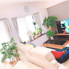 リビングダイニング/リビングインテリア/家が好き/インテリア大好き/グリーンのあるインテリア/グリーンのある生活/... 観葉植物増殖中😅💦(3枚目)