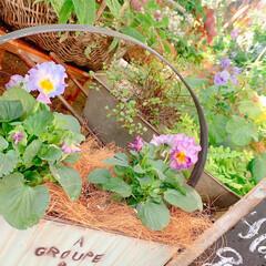 ベランダガーデニング/花のあるくらし/花のある生活/花のある暮らし/花/お花大好き/... 夏のお花がまだまだ元気だというのに、お花…(4枚目)