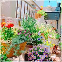 ガーデニング雑貨/ベランダガーデン/ベランダガーデニング/お花大好き/春のフォト投稿キャンペーン/令和の一枚/... このGWは、ベランダのお花を夏花に一気に…