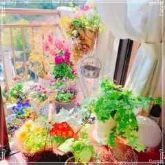 ベランダガーデン/ベランダ/お花大好き❤/ガーデニング雑貨/ダイソー/セリア/... 窓から見えるベランダガーデン😊❤️ ハン…