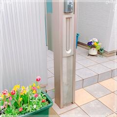 手作りシフォンケーキ/チューリップ/寄せ植え/お花大好き/LIMIAごはんクラブ/ハンドメイド/... お友だちのお家にお花を植えに行きました❤…(2枚目)