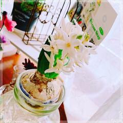 ジュリアン/ビオラ/多肉植物/ヒヤシンス/ベランダ/ベランダガーデン/... 今日はお昼から晴れて☀️一斉にお花にお水…