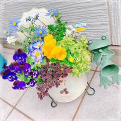 手作りシフォンケーキ/チューリップ/寄せ植え/お花大好き/LIMIAごはんクラブ/ハンドメイド/... お友だちのお家にお花を植えに行きました❤…(3枚目)