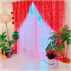 多肉りうむ/カーテン/窓辺/フォロー大歓迎/ハンドメイド/雑貨/... 洋室カーテンシリーズ✨ 全室雰囲気が違い…