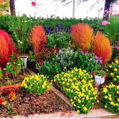 お買い得❤️/お花大好き❤/素敵ガーデン/おでかけ 近くで行われている催しへ出かけました✨✨…