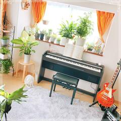 ギター/ピアノ/インテリアグリーン/観葉植物のある暮らし/雑貨/住まい/... ピアノ部屋  ん?  植物部屋??(笑)
