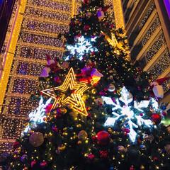 インナーガーデン/mewe/ツリー/クリスマス うちの近くの商業施設の5階にあるインナー…