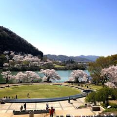桜/津久井湖水の苑池/お花見/おでかけ 桜Part2🌸 毎年この場所にお弁当、お…