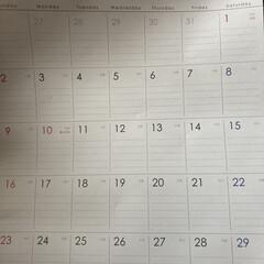 暮らし/100均/100均グッズ/100均同好会/第6回最近買った100均グッズ/セリア セリアで来年のカレンダーとアイシャドウ買…(1枚目)
