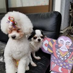 ペット仲間募集 年賀状用の写真を撮りました。 年賀状らし…(2枚目)