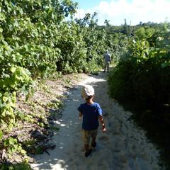 family/旅行/家族/息子/宮古島/BEACH beachに向かう砂山をあるくマイメン二…
