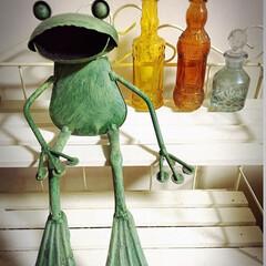 カエル/瓶/インテリア お気に入りの瓶とカエルちゃん🐸 ※始めに…