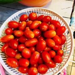 家庭菜園 家庭菜園で大量にとれた野菜たち  子ども…(3枚目)