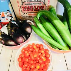 家庭菜園 家庭菜園で大量にとれた野菜たち  子ども…