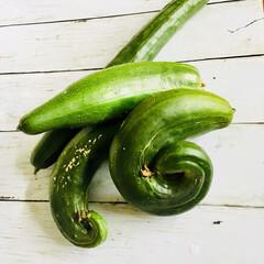 家庭菜園/フード 家庭菜園でいっぺんに収穫出来ちゃう キュ…