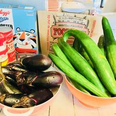 家庭菜園 家庭菜園で大量にとれた野菜たち  子ども…(2枚目)