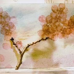 手作り消しゴムはんこ/春のフォト投稿キャンペーン/春の一枚/桜/イラスト 消しゴムはんこで桜を絵描き 桜の木の枝で…