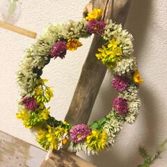 リース/野花/春/春のフォト投稿キャンペーン/わたしのお気に入り 春の野花で花冠🌼