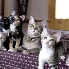 家族写真/LIMIAペット同好会/ペット/猫/にゃんこ同好会/うちの子ベストショット 真ん中にいるのがお父さん😸 息子4ニャン…
