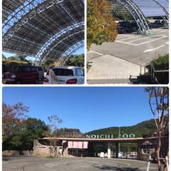 日本一の動物園/おでかけ 10月某日高知の のいち動物公園と龍河洞…(2枚目)