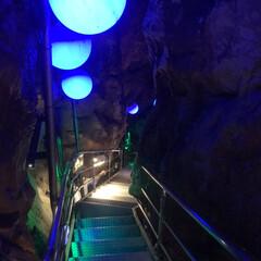 日本一の動物園/おでかけ 10月某日高知の のいち動物公園と龍河洞…(8枚目)